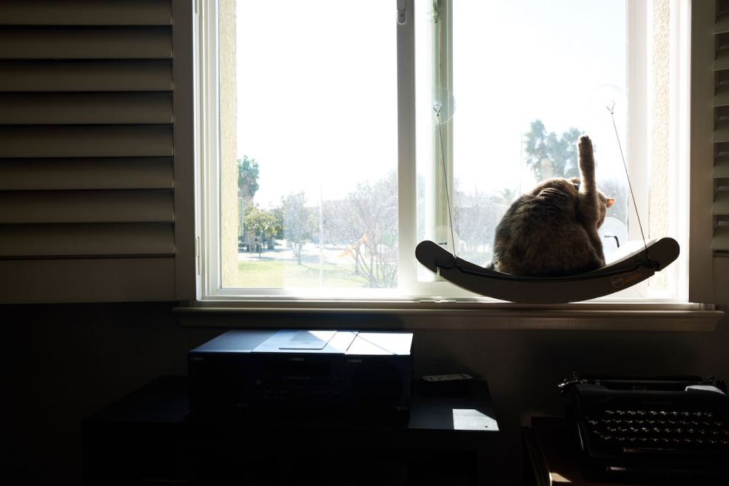 cat sitting at a window with her hind leg in the air while she is cleaning herself