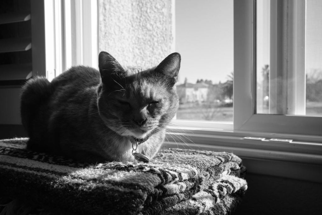 our cat, laying on a blanket by an open window. Half of her in the afternoon sunlight and the other half in shadow