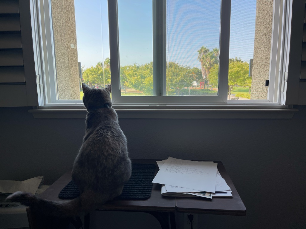 a picture of a cat sitting on a typewriter table, looking out the window