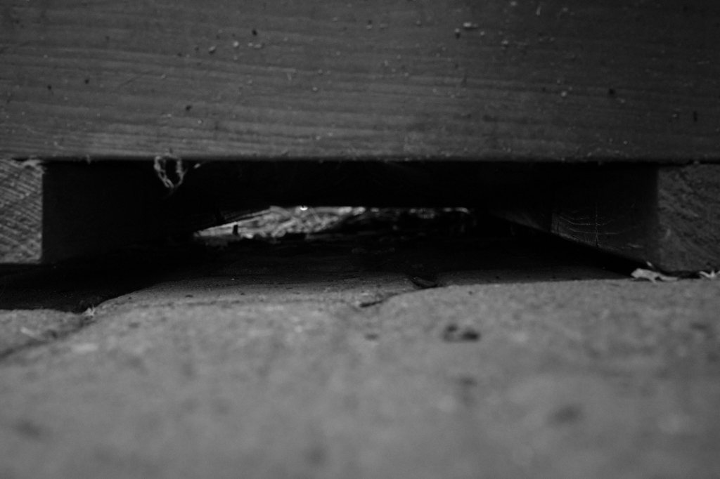 a picture of the darkness beneath a wooden planter, from ground level